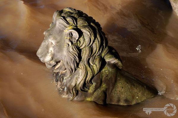 Drowning Lion