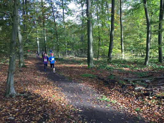 Lauf im herbstlichen Wald