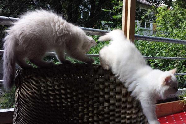 Kira und Naomi, 3 Monaten
