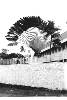 12/2/90: 0: Fan Palm Glaxo offices Colombo