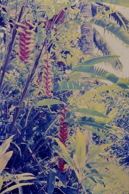 2/12/1990: 27: Rarotonga, taro plantation