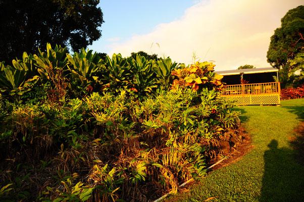 Lass dich mit deiner Community, mit deiner Gruppe von Maui, Hawaii und unserem Platz berühren