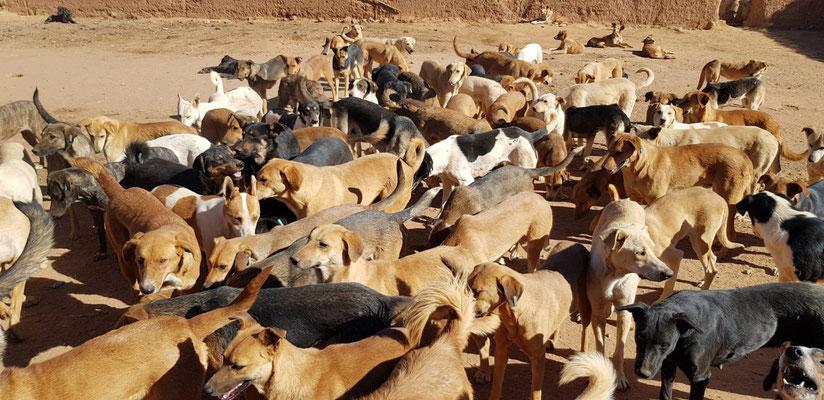 Auf Ayur's Spuren in Marokko: Tierheim mit 700 Hunden