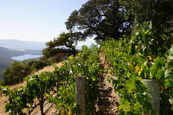 Kulte Estate Vines
