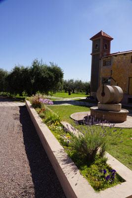 Olivenöl Hersteller Laur - Mendoza
