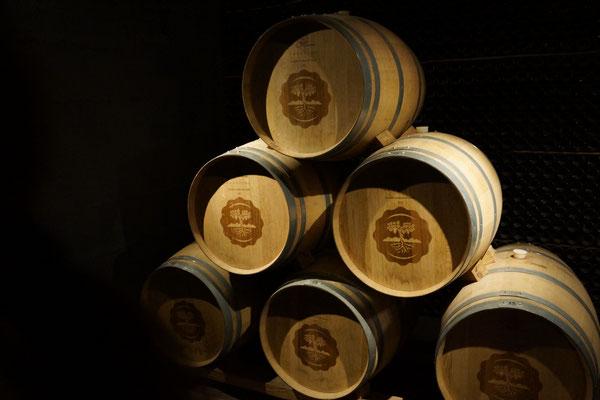 Olivenöl von Laur - Mendoza