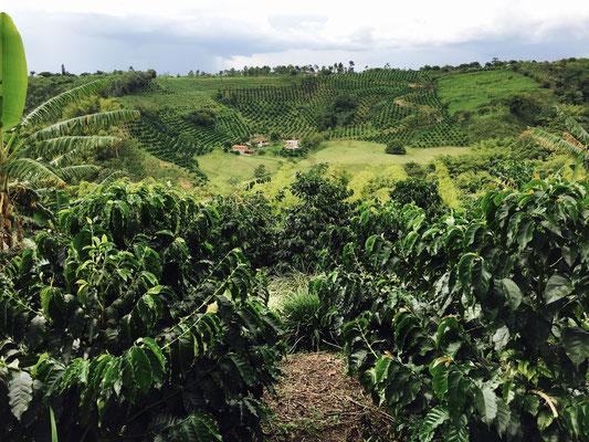 Kaffee Plantagen