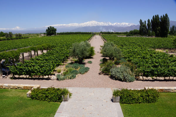 Bodega Cruzat - Mendoza