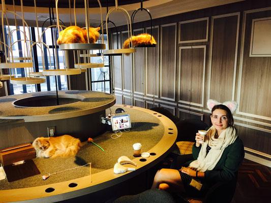 Katzen-Kaffee - 10 Minuten Katzen kraulen /CHF 3.-