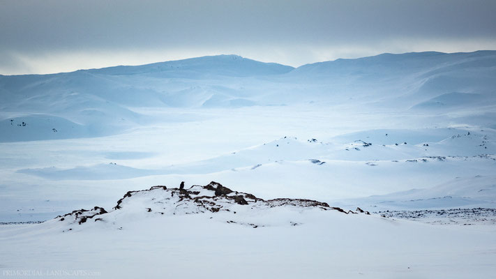 A raven accompanied us at Botni. Sigurðarskarð, the mountain pass that leads to Askja, in the background.