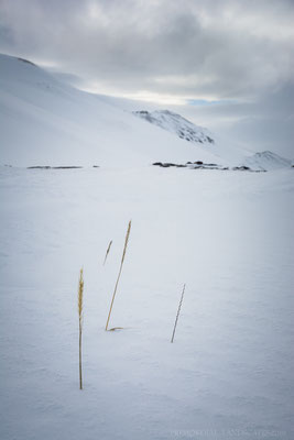 A short moment of good weather at our camp below the Hvammfjöll