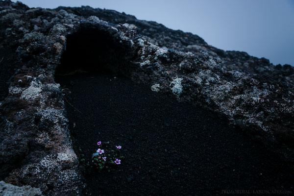 Icelandic Jardinière
