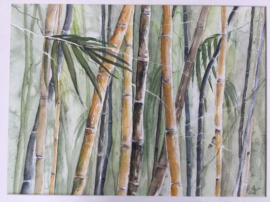Bambus   30x40