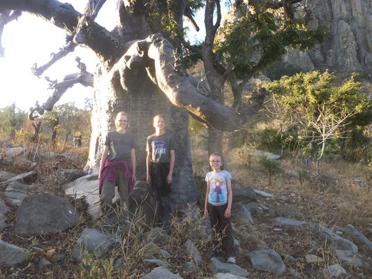 Awesome Baobab Tree During a Day of Hiking in the Mountains