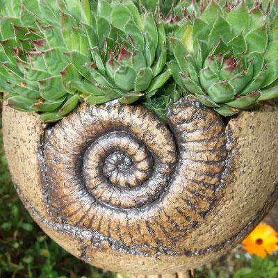 """Keramik-Pflanzkugel """"Ammonit"""", natur-braun mit dunklen Reliefs, matt, bepflanzt mit Hauswurz;  lovely-cera ~ schöne Keramik-Kunst Nürnberg"""