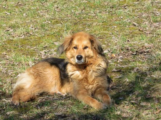 Waldhund Ella