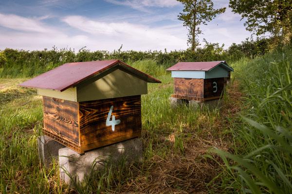 Installation du rucher
