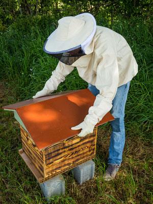 Entretien des ruches