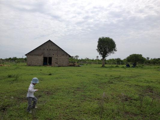 Sicht vom Garten Richtung Wohnhaus und hinter dem grossen Baum wieder die Wohnhäuser
