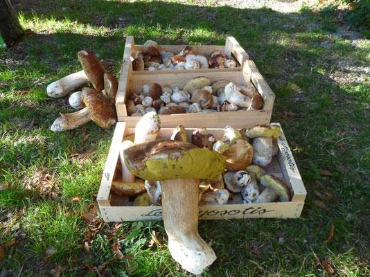 L'automne... et ses cèpes ! #champigons