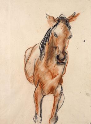 Das Pferd (unbez.)