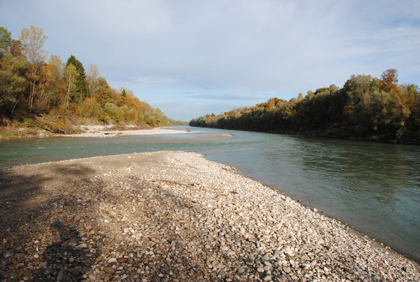 Mündung der Saalach