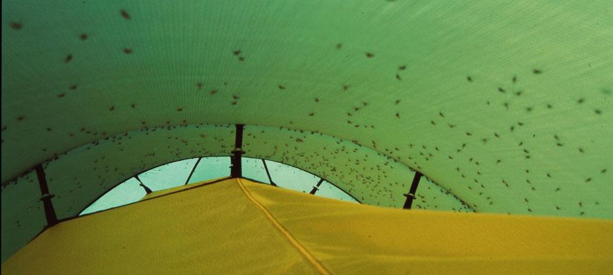 Da schätzt man ein Zelt mit Moskitonetz