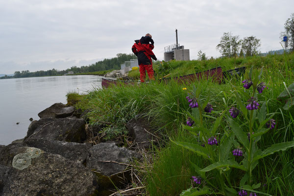 Start an einer Bootsrampe der Donau