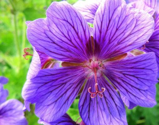 Blüten-Nahaufnahme