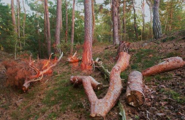 Die Abendsonne erzeugt scheinbar brennendes Holz