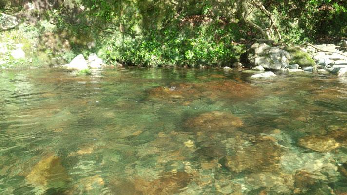 水量豊富。釣りがしたい。
