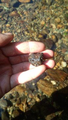 かなくそ。川に流れて他の石同様に丸く削れています。地上にあるものはゴツゴツです。