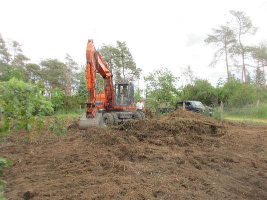 Unterholz und Wurzeln zusammenziehen