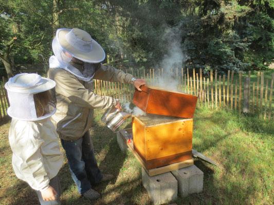 Ein bißchen Rauch in das Volk geben um die Bienen zu beschäftigen.