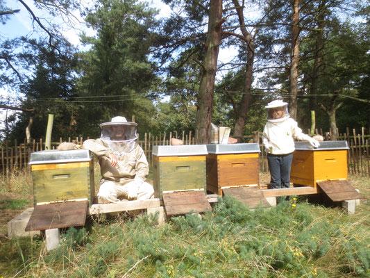 Die Imker-AG am Bienenstand.