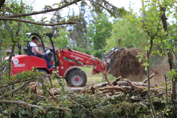 Unterholz und Wurzeln beräumen