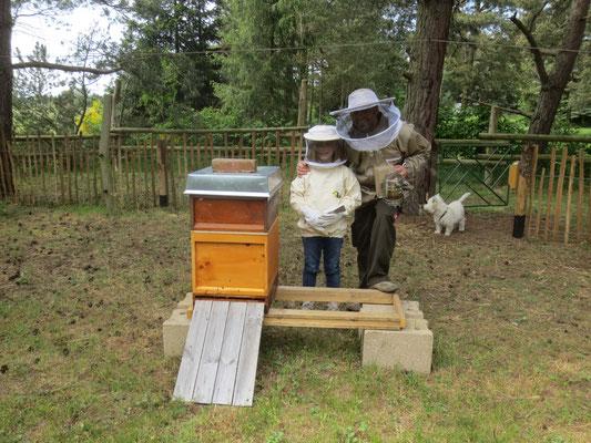 2016 - das erste Bienenvolk ist da ...
