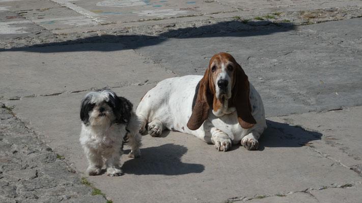 Amigos, La Gomera, Feb. 2016