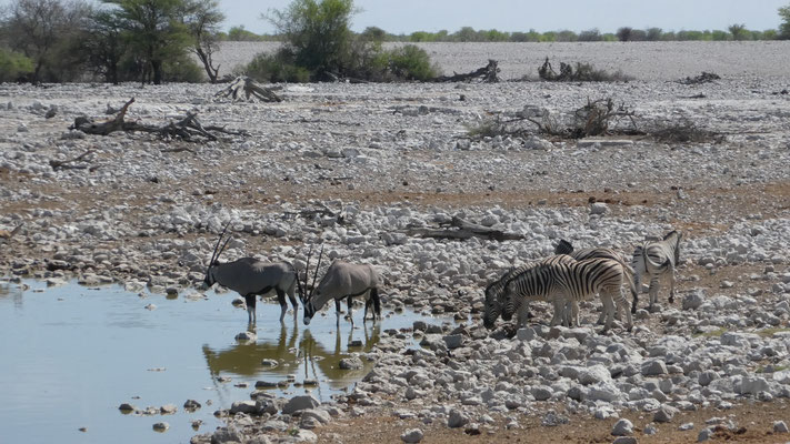 Etosha Nationalpark, Nov. 2016