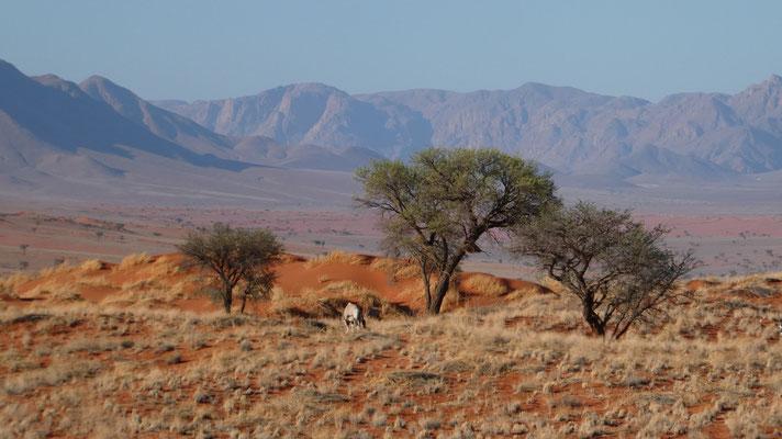 Namib, Nov. 2016