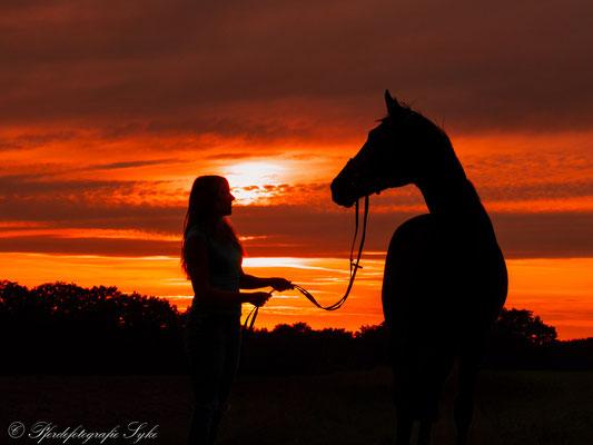 Pferdefotografie Syke Schattenriss Silhouette
