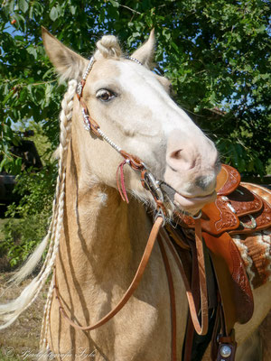 Pferdefotografie Syke Portraits Tinker