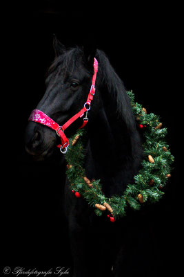 Pferdefotografie Syke schwarzer Hintergrund Rappe Kranz