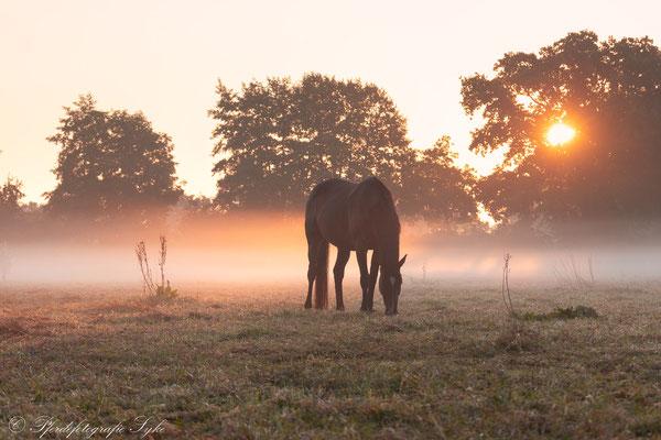 Nebel Sonnenaufgang Pferd