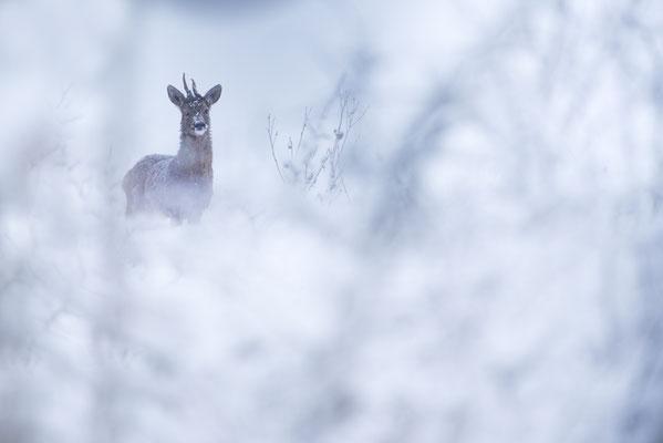 """PIRAUD Marlène """"Le prince des neiges"""""""