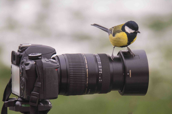 """SAOU Geoffroy """"Le photographe et la charbonnière"""""""