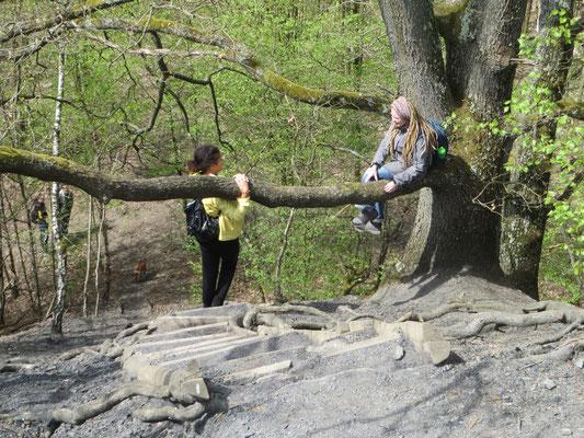 Bäume sind zum Hinaufklettern da, keine Frage!