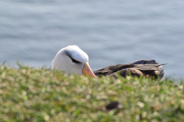 Lilo Tadday Helgoland Albatros I