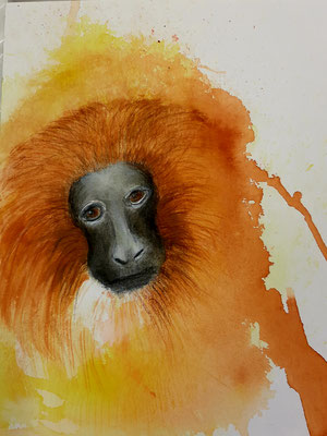 Porträt Affe