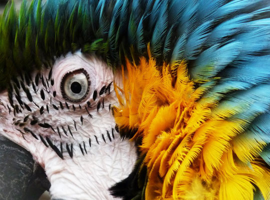 """Das Foto """"Papagei"""" ist in der aktuellen Broschüre vom WHITEWALL zu sehen und auch auf dem Kunstmarkt zu kaufen."""